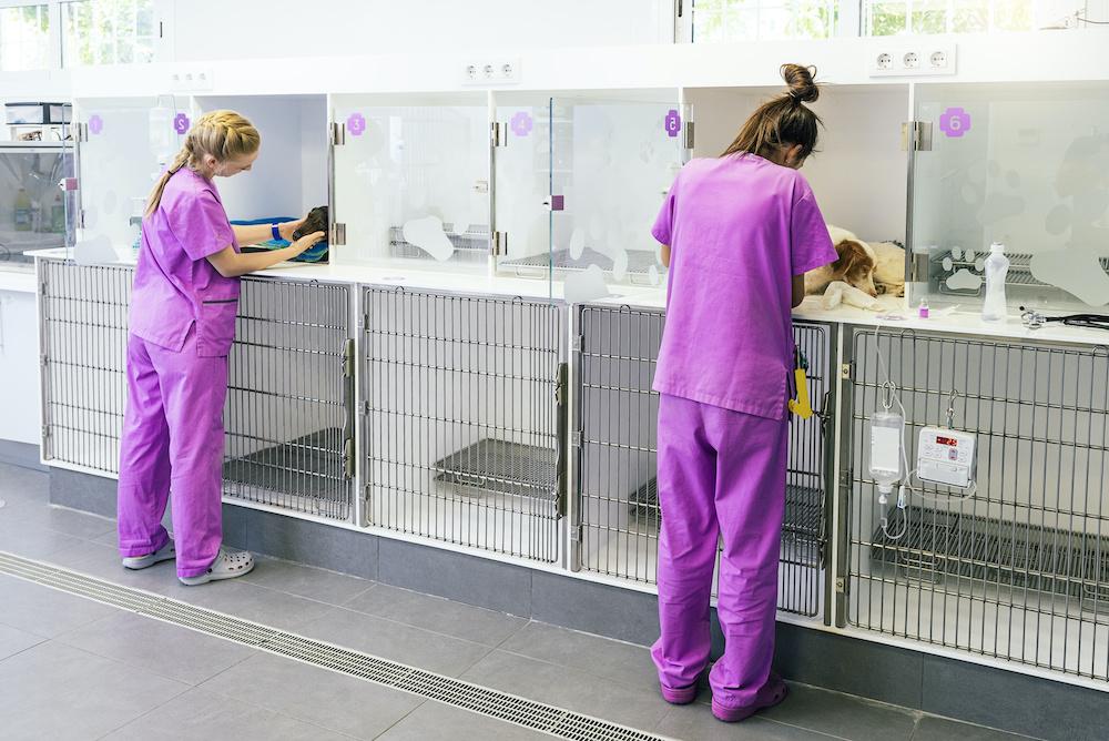 ASV en clinique vétérinaire canine